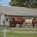 S'Whiz Ranch